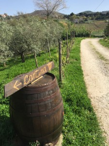 Minardi-Winery-Surroundings