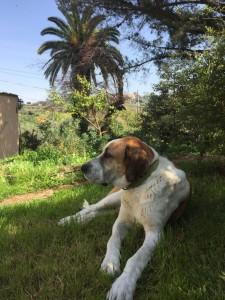 Minardi-Winery Dog